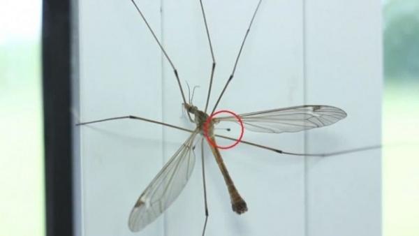 Интересное: Почему комары так противно пищат?