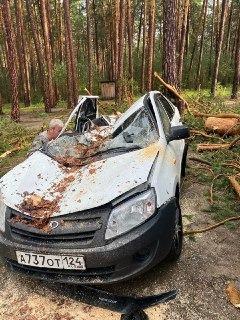 Происшествия: Один человек погиб, четверо пострадали при падении деревьев в палаточном лагере на озере Маслеево в Красноярском крае