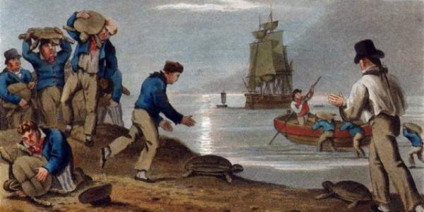 История: Как приготовить черепаху или Что ели моряки в эпоху парусного флота
