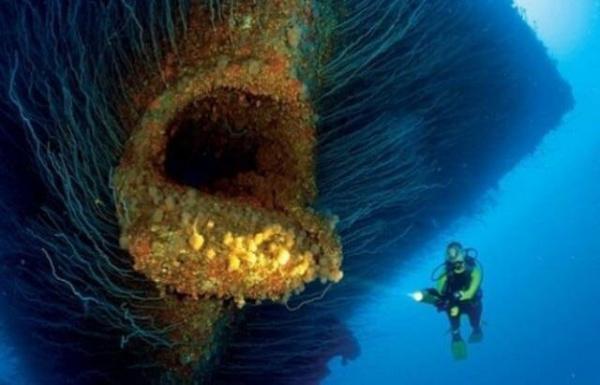 Природа: Океанская бездна
