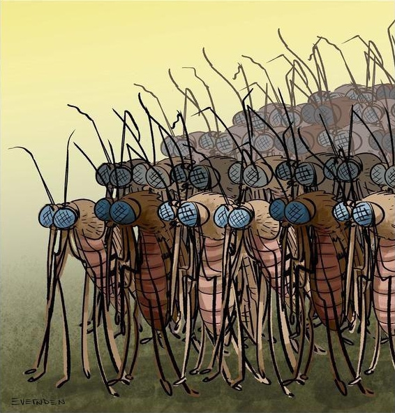 Полезные советы: Как убрать укус комара за несколько секунд