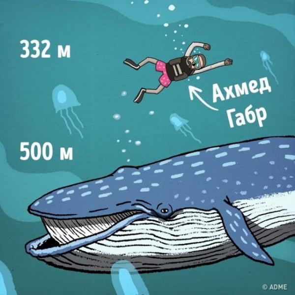 Интересное: Насколько все-таки глубок океан?