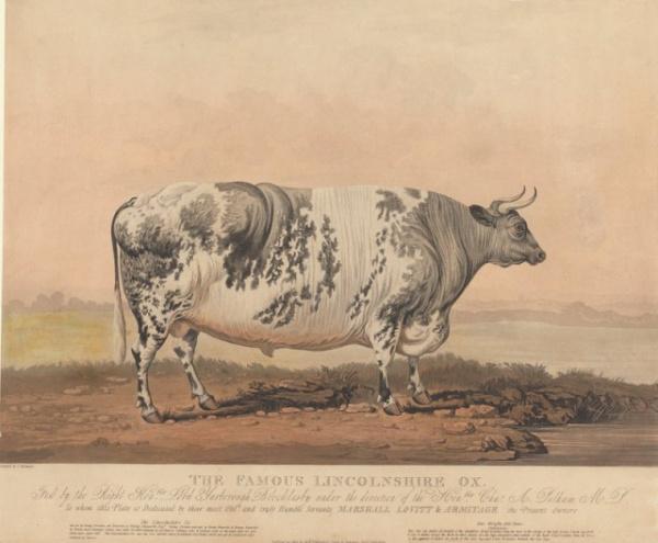 Животные: Почему у фермеров XIX века были популярны картины своих жирных животных?