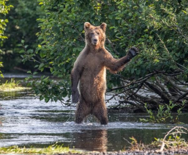 Животные: Премия комедийной фотографии дикой природы-2020