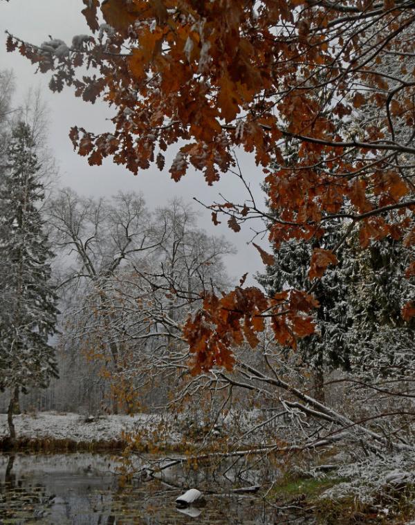Природа: Гидрометцентр предупредил о наступающих заморозках