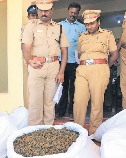 Криминал: Индийские полицейские конфисковали 160 килограммов анаши и... скурили его