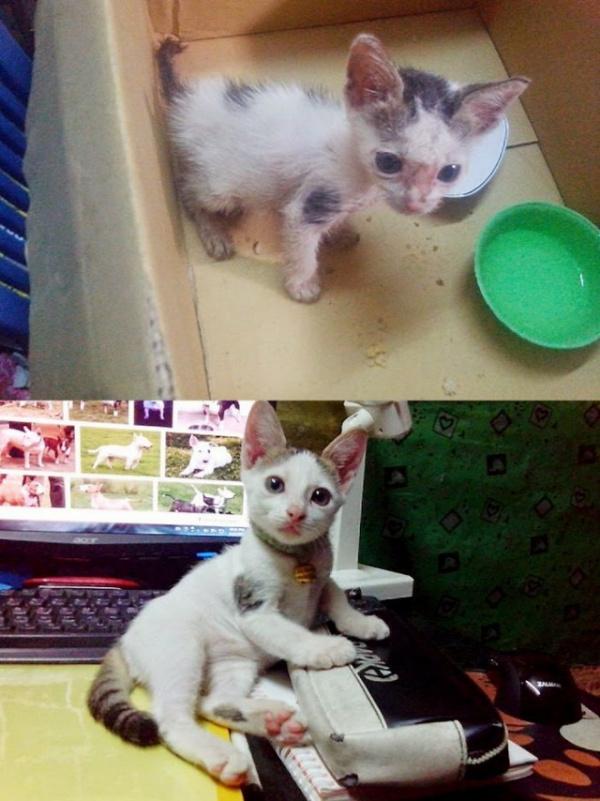 Животные: Спасенные животные. До и после
