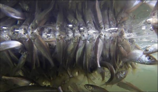 Интересное: Как зимует рыба?