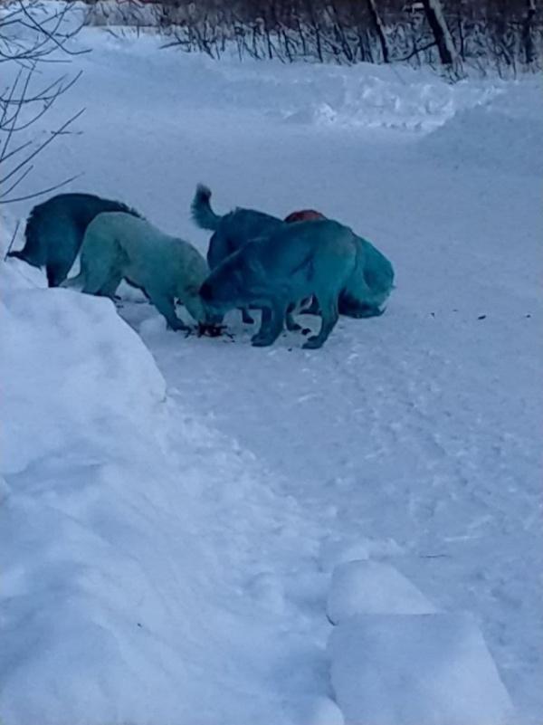Животные: Дзержинск заполонили синие собаки :-)
