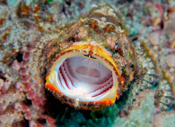 Интересное: Рыба-камень