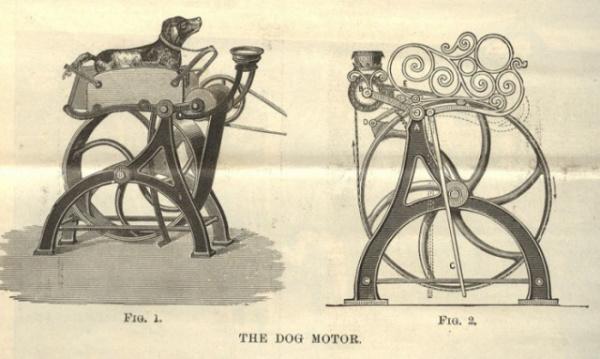 Животные: Чем занимались вертельные собаки