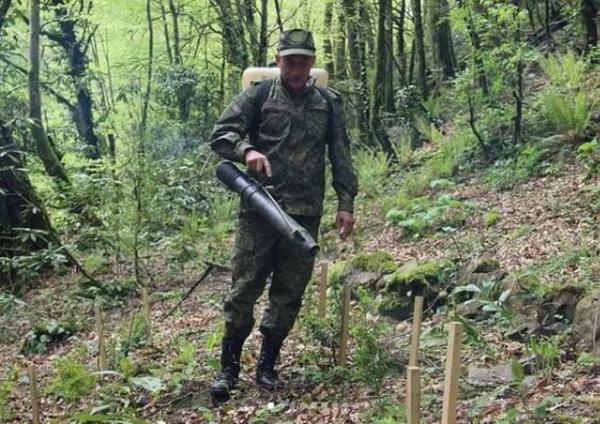 Природа: В Сочинском национальном парке саженцы самшита обработали химпрепаратом от огневки
