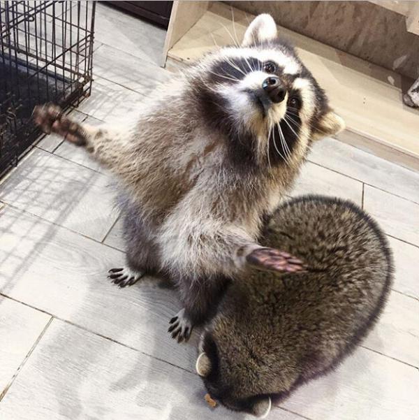 Животные: Ах Тунг