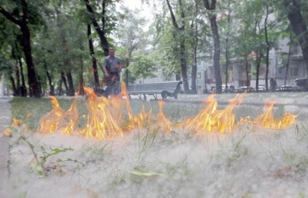 Право и закон: За поджог тополиного пуха штраф до миллиона рублей