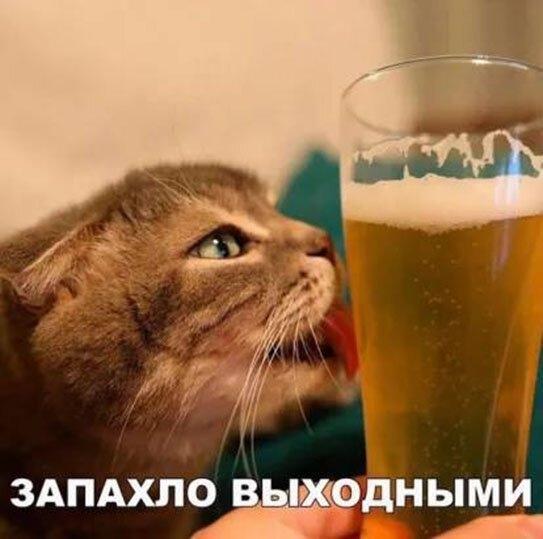 Юмор: Смешные картинки на воскресенье :-)