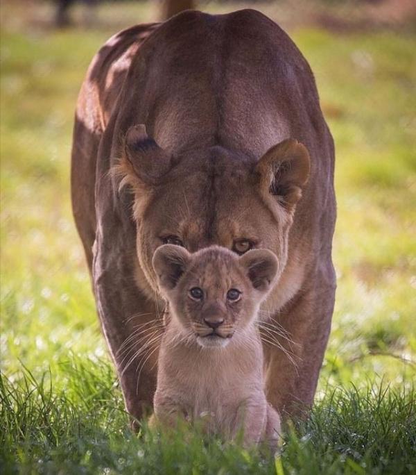 Животные: Отличное фото