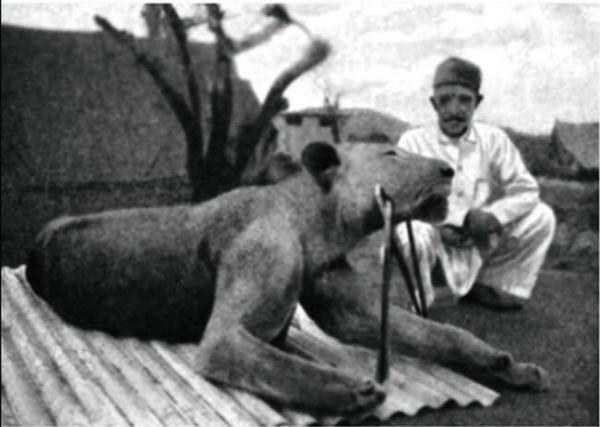 Животные: Людоеды из Цаво: история самого знаменитого в истории противостояния между человеком и львом