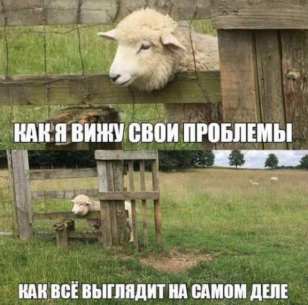 Картинки: Смешные и интересные картинки на субботу :-)