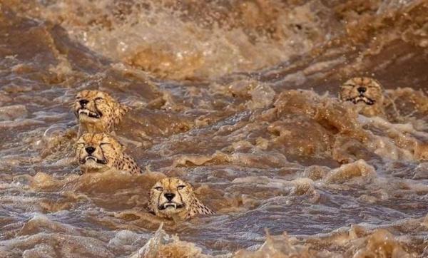 Животные: Потрясающее фото