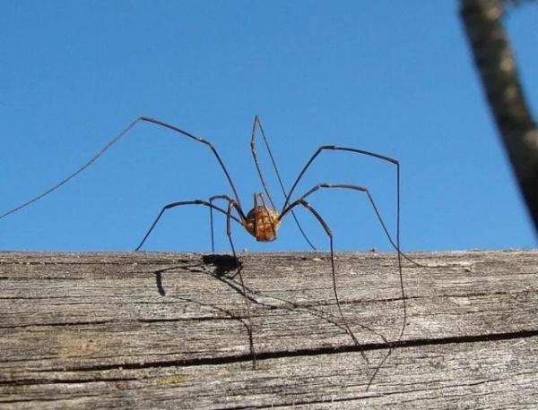 Интересное: Три вида «домашних пауков», которые реально полезны в доме