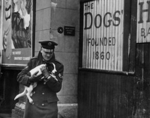 История: «Британская резня питомцев»: как англичане убили 750 тысяч домашних животных из страха перед Гитлером