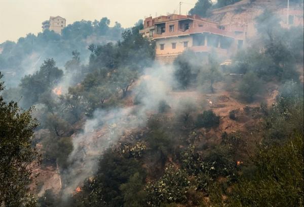 Происшествия: Президент Алжира объявил трёхдневный траур по погибшим в лесных пожарах