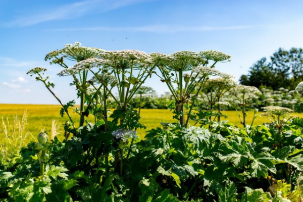 Природа: Осторожно: растения-агрессоры! Захватчики с других континентов