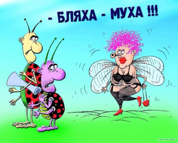 Интересное: Почему мухи привлекают человека?