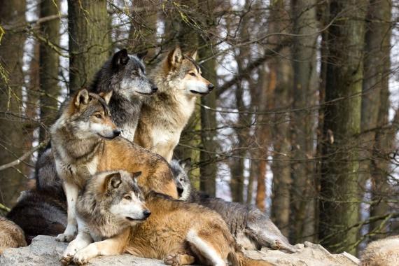 Интересное: Трофический каскад или как волки меняют реки