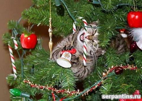 Юмор: Коты и елки