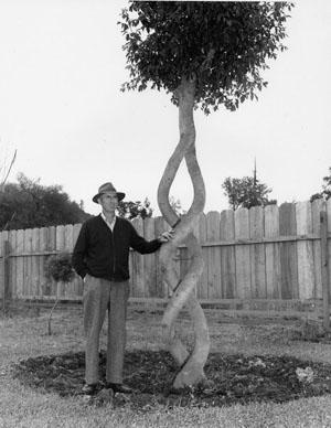 Интересное: Конструкции из живых деревьев