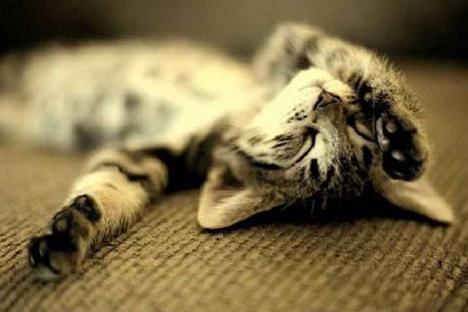 Интересное: Как спят кошки
