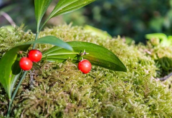 Природа: Прогулка по Тисо-самшитовой роще