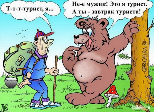 Животные: Медведи