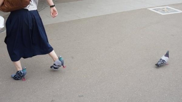 Безумный мир: Туфли-голуби