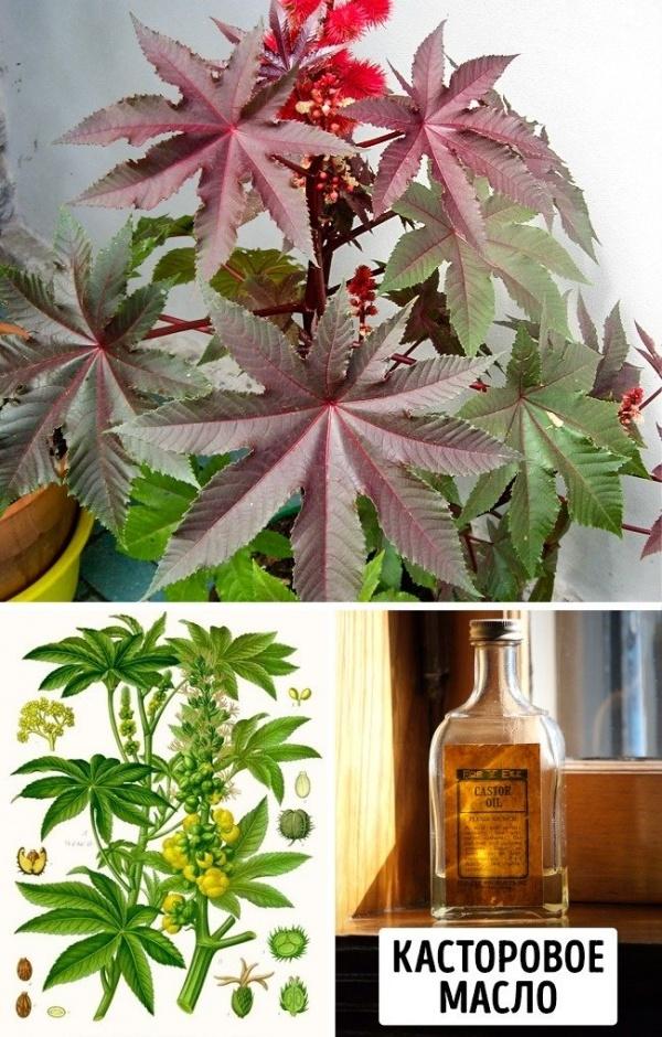 Полезные советы: Самые ядовитые растения