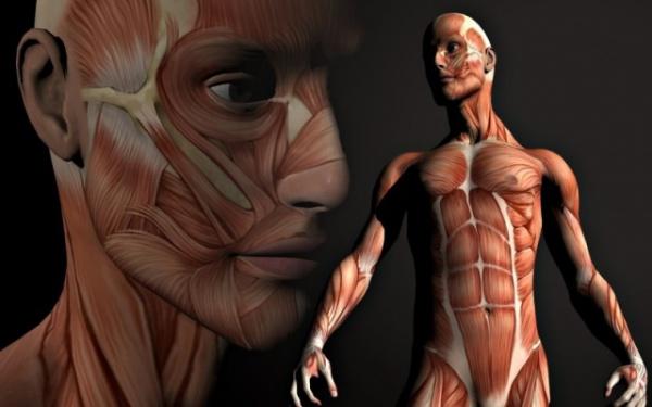 Здоровье: ОБновление организма человека