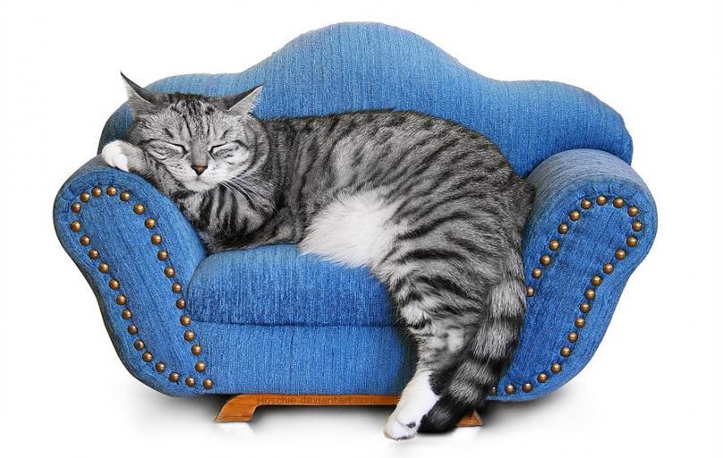 картинки сидящих спящих кошки этом, сколько