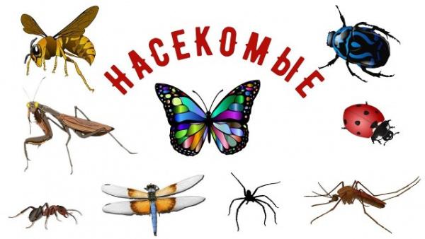 Интересное: История применения насекомых в войне