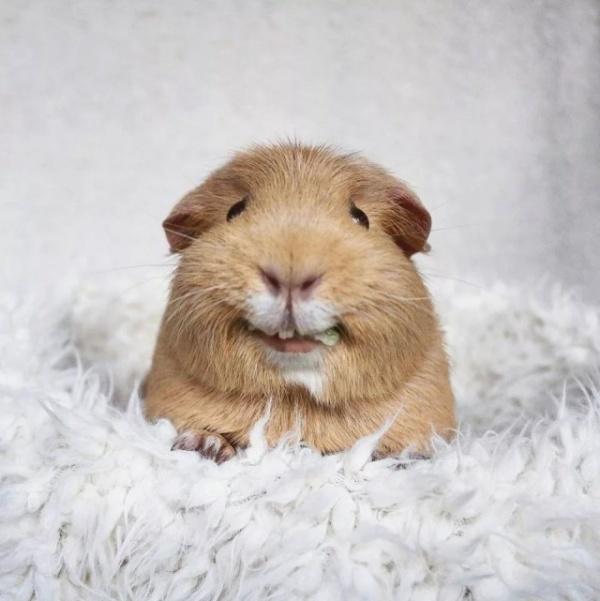 Блог kir: Государственная свинья