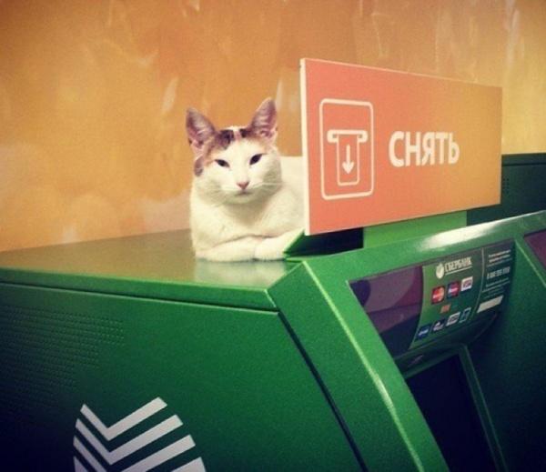 Блог kir: Новый способ мошенничества через банкоматы Сбербанка