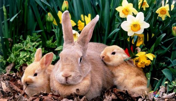 Животные: Австралийская война с кроликами