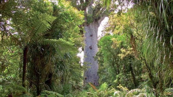 Интересное: Загадочная стена в Новой Зеландии