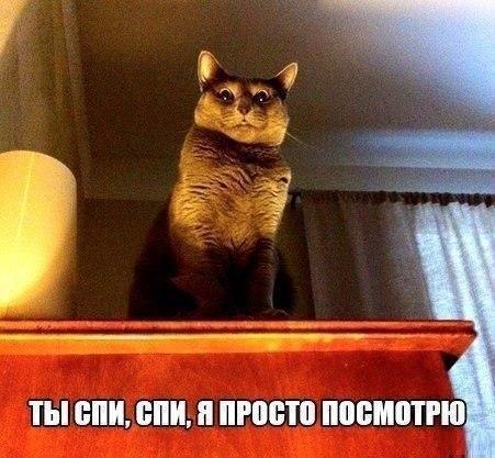 Юмор: Смешная картиночная подборка :-)