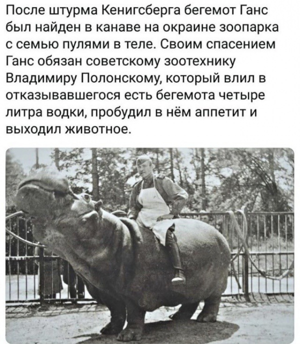 Животные: *Спиритус вини* для грустного бегемота