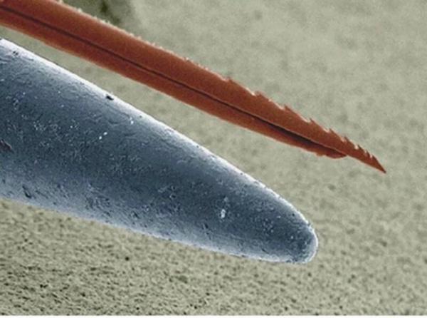 Интересное: Жало осы и игла под микроскопом