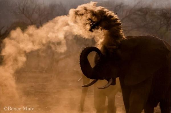 Животные: Дикая природа в фотографиях