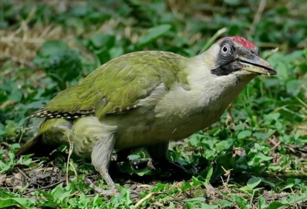 Природа: Дятел - какая интересная птица