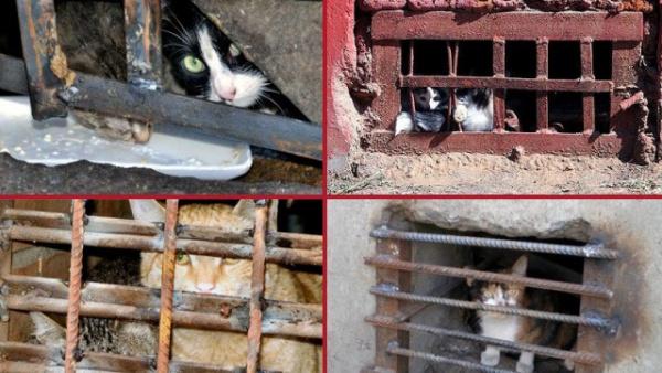 Животные: В Москве для кошек откроют подвалы