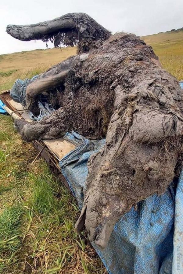 Интересное: В России найдены хорошо сохранившиеся останки  древнего медведя